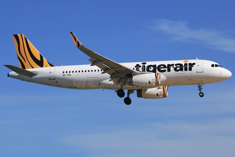Tigerair arkivbilder