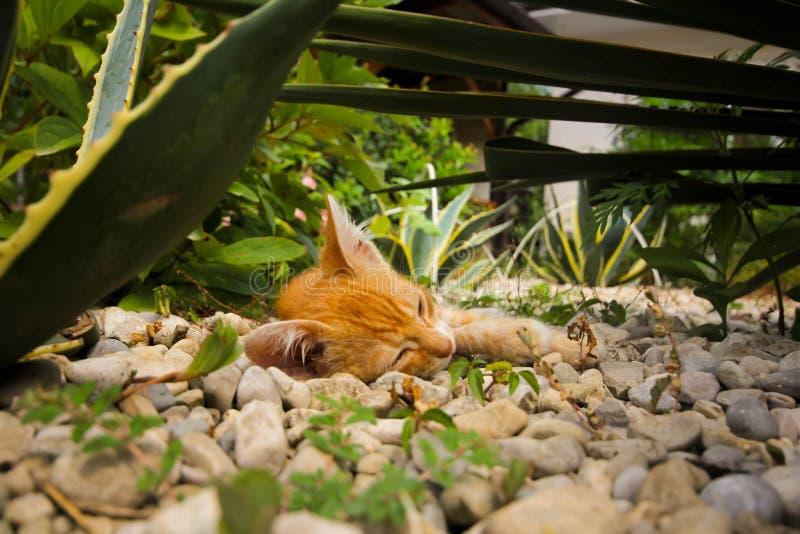 Tigerjunges im Dschungel lizenzfreies stockbild