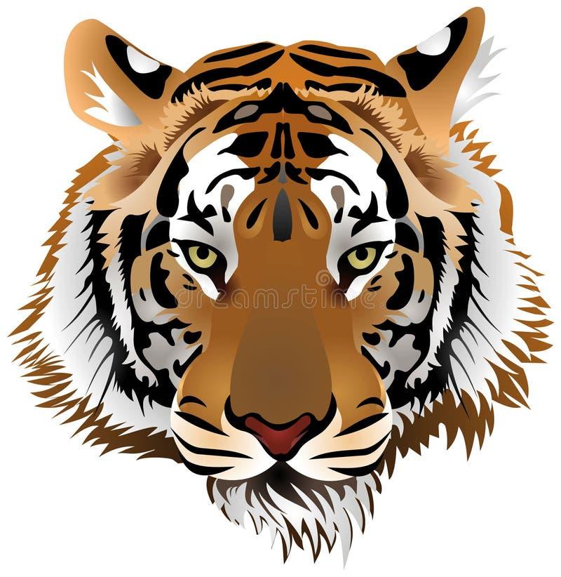Tigerkopf lizenzfreie abbildung