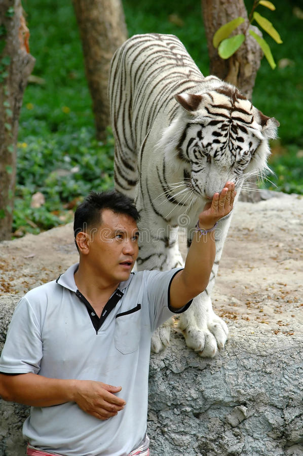 Tigerman stock images