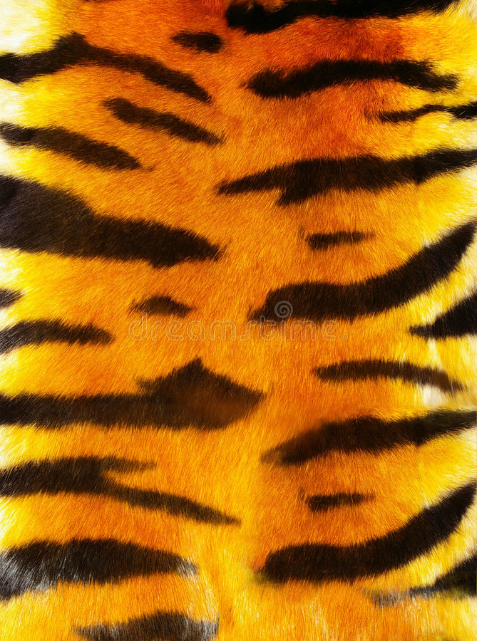 Tigerpelz lizenzfreies stockbild