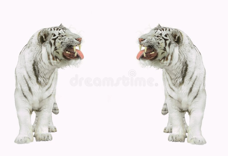 Download Tigers. Stock Images - Image: 3880754