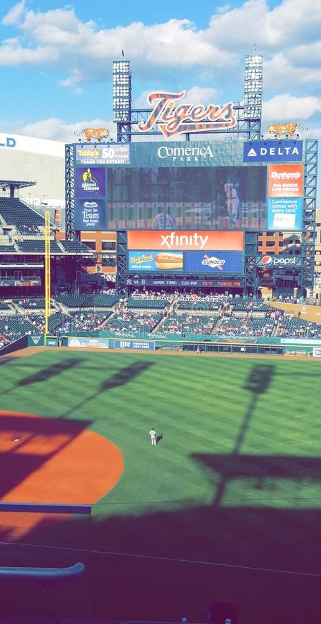 The Tigers Field royalty free stock photos