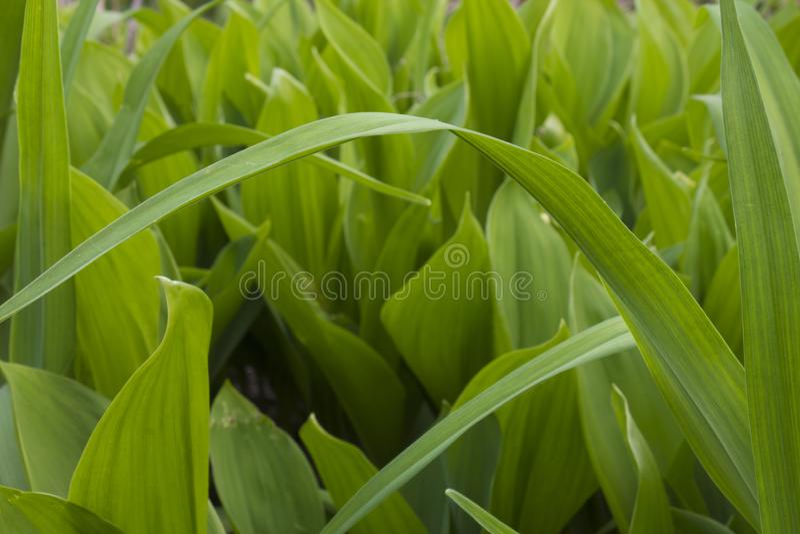 Tiges d'herbe de ressort photographie stock
