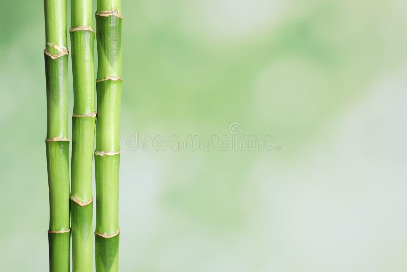 Tiges en bambou vertes sur le fond brouillé avec l'espace photo libre de droits