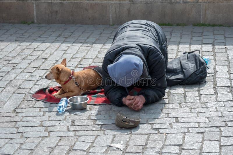 Tiggare hemlös med hunden nära Charles Bridge, Prague, Tjeckien arkivfoton