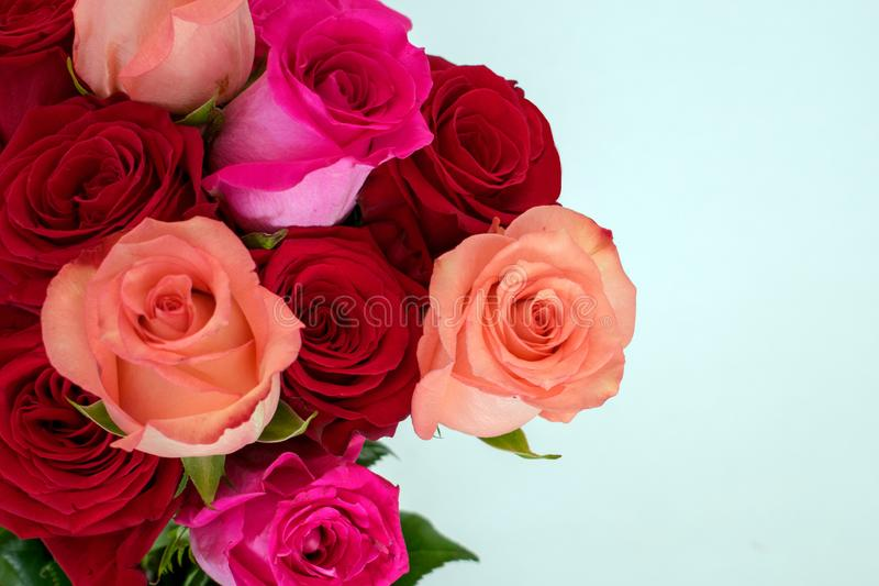 Bouquet of red and pink roses at left on white stock photography