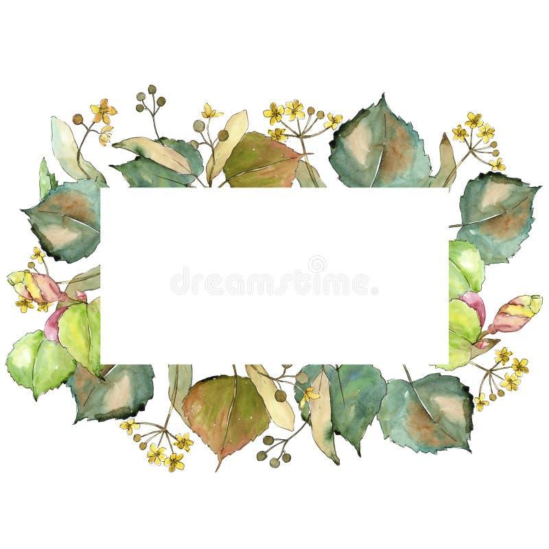Tiglio delle foglie verdi Fogliame floreale del giardino botanico della pianta della foglia Quadrato dell'ornamento del confine d illustrazione vettoriale