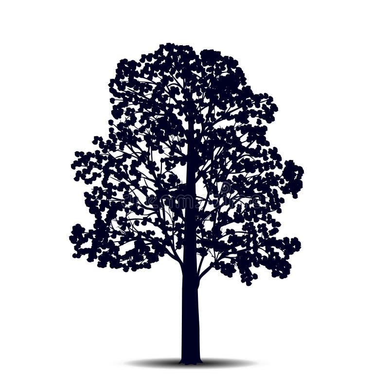 Tiglio distaccato dell'albero della siluetta con le foglie royalty illustrazione gratis