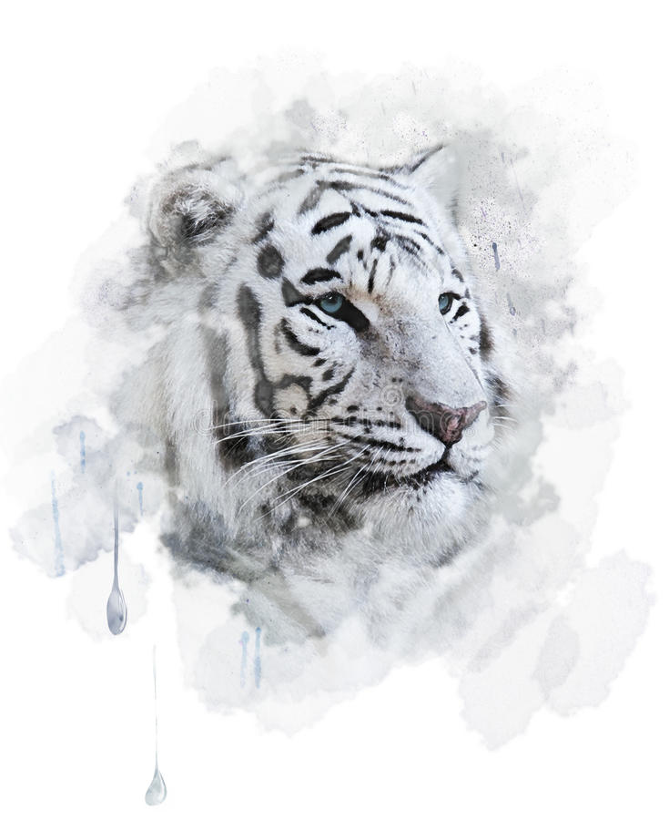 Tigre blanc illustration stock