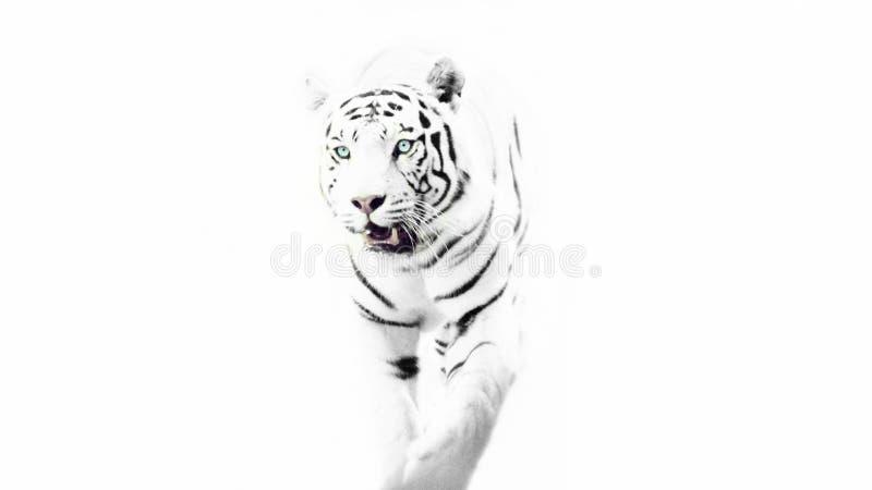 Tigre blanc minimal image libre de droits