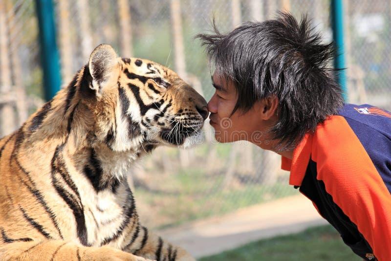 Tigre, Chiang Mai, Tailândia imagem de stock