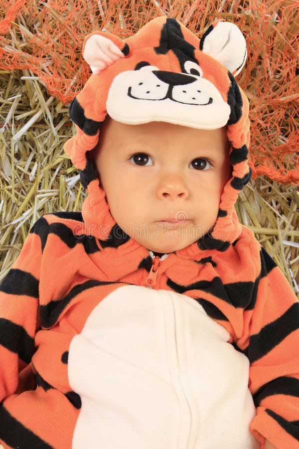 Tigre de bébé image stock