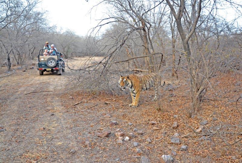 Tigre de Bengale royal dans le sauvage image libre de droits