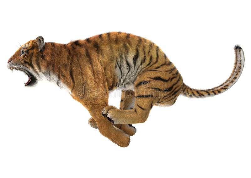 Tigre de chasse images stock