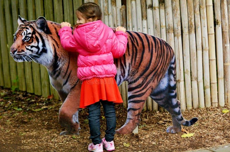 Tigre de Sumatran das trocas de carícias da menina imagem de stock