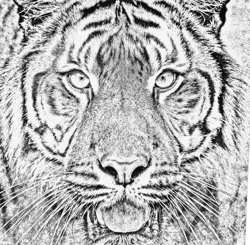 Tigre de Sumatran, sumatrae de tigris do Panthera ilustração stock