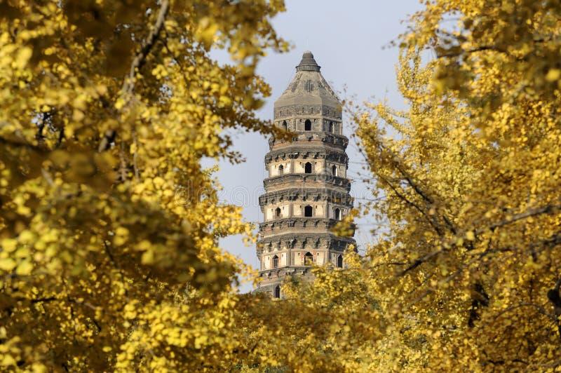 tigre de suzhou de pagoda de côte photos libres de droits