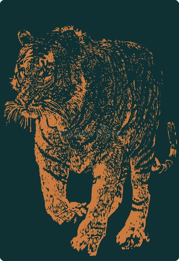 Tigre de Vectror libre illustration