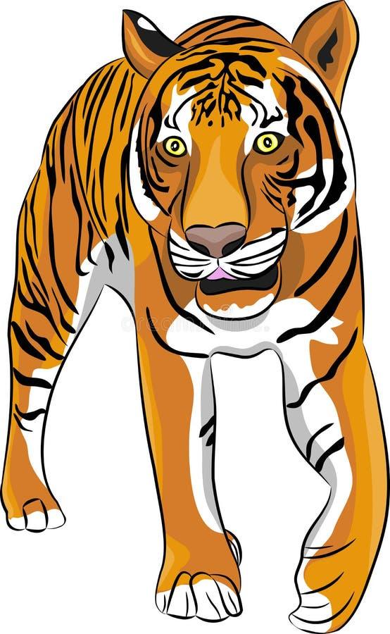 Tigre del vector ilustración del vector