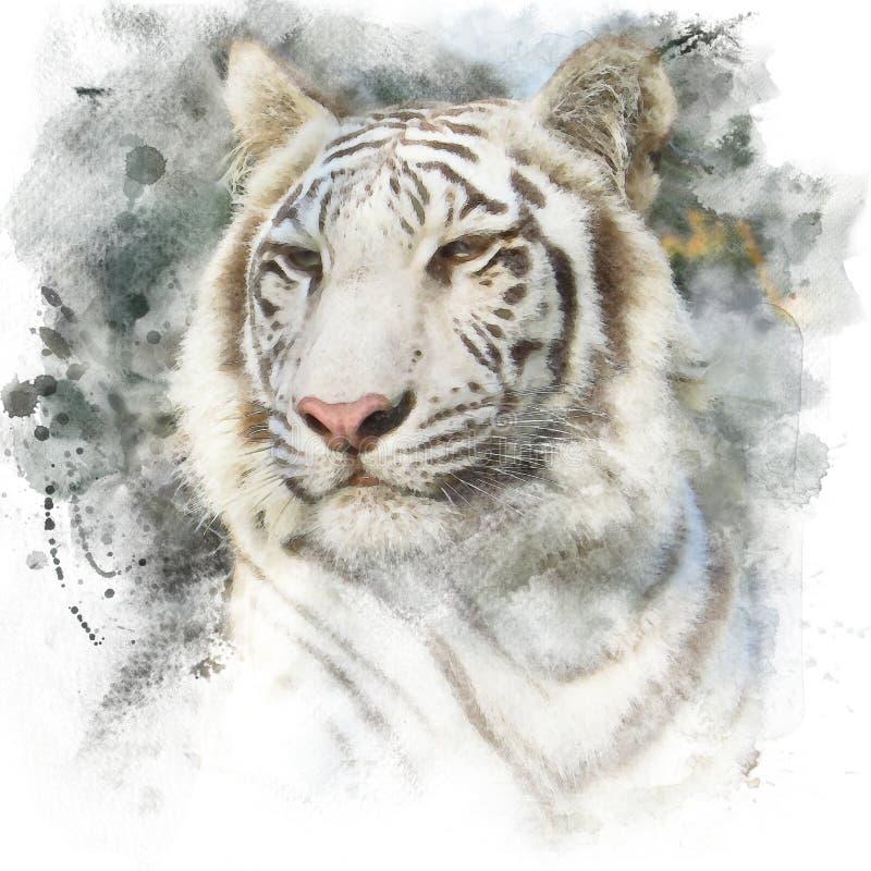 Tigre di Bengala bianca illustrazione vettoriale
