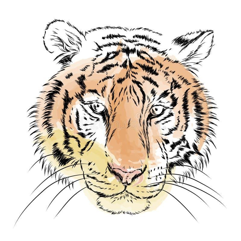 Tigre di vettore watercolor royalty illustrazione gratis