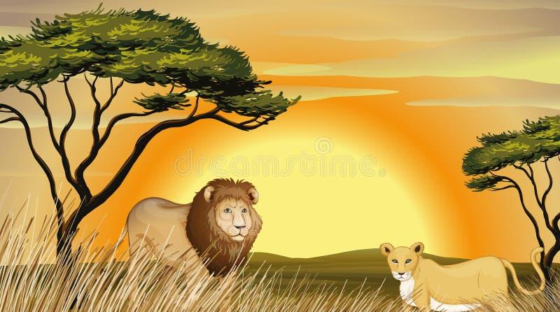 Tigre e leone illustrazione di stock