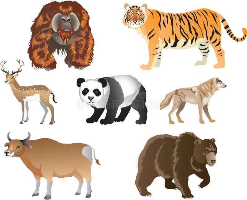 Tigre, gato grande de la selva asiática - ejemplo del vector ilustración del vector