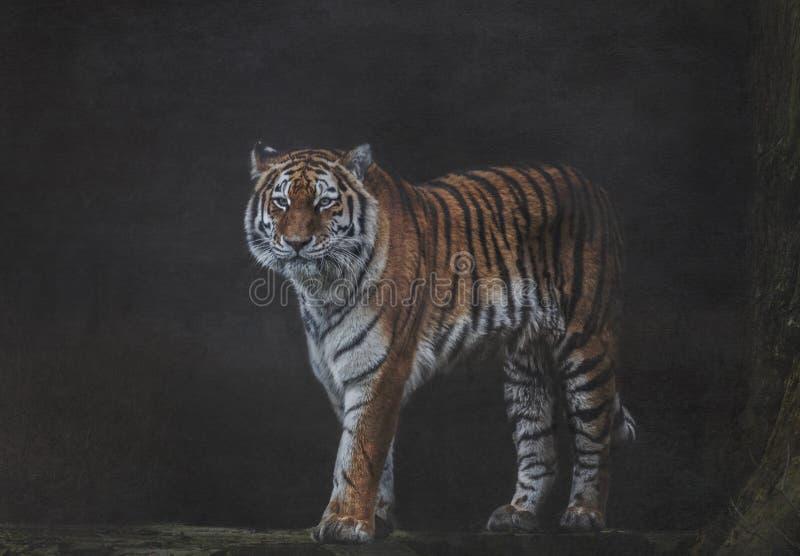 Tigre na floresta dusky imagens de stock