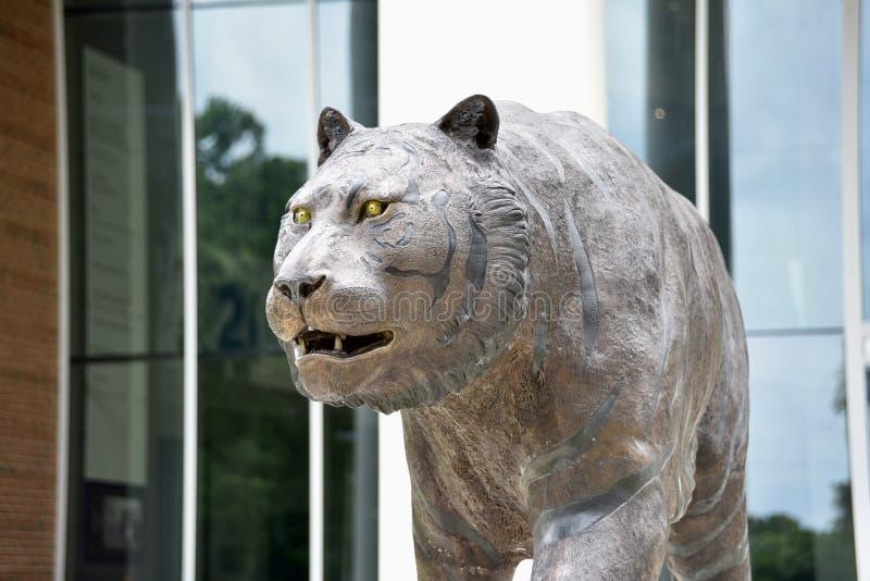 Tigre na universidade de Memphis Basketball Facility, Memphis, TN fotos de stock royalty free