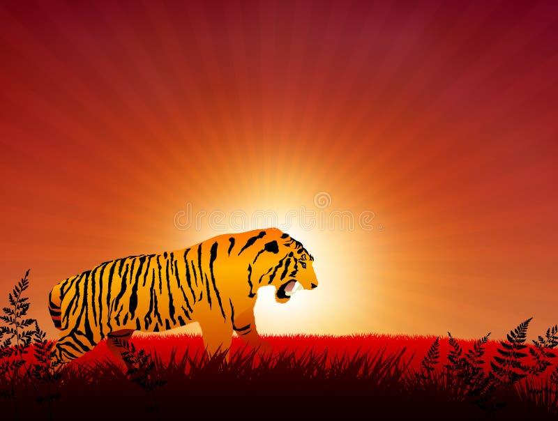 Tigre no fundo do Internet do por do sol ilustração royalty free