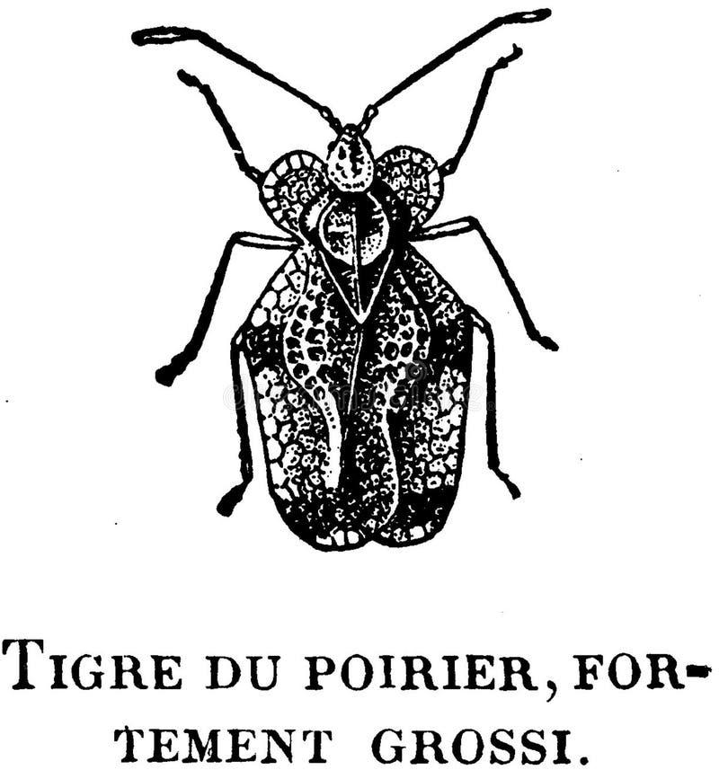 Download Tigre-poirier-OA stock image. Image of  - 83039063