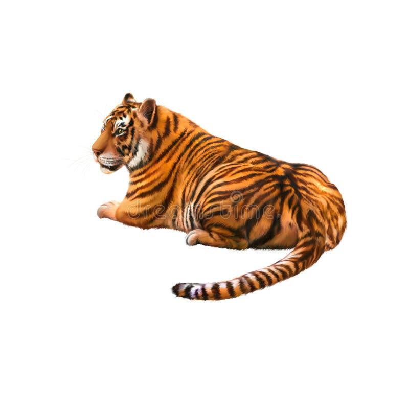 Tigre que pone la mirada lejos imágenes de archivo libres de regalías