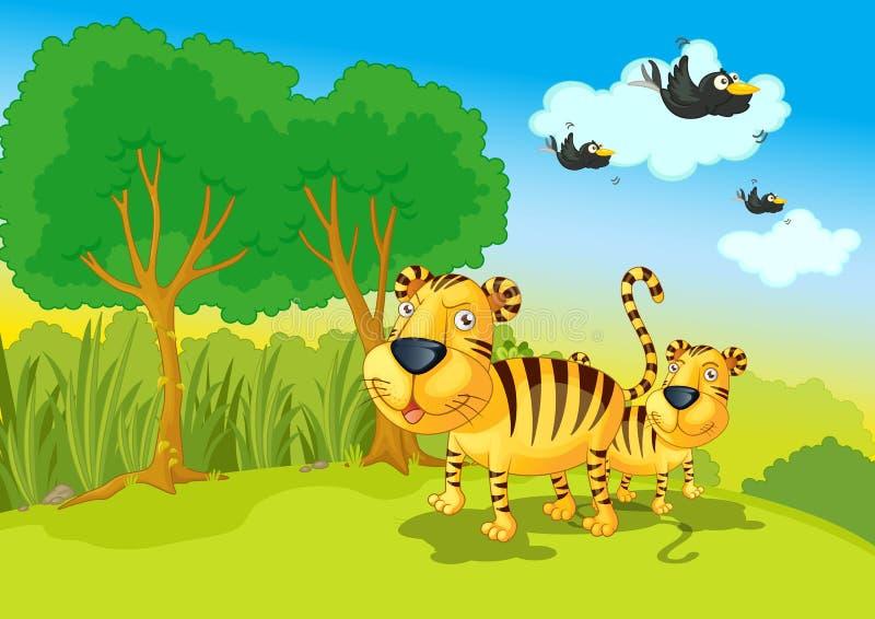 Tigres illustration de vecteur illustration du cartoon - Images tigres gratuites ...