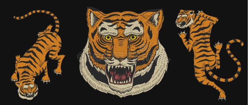 Tigri asiatiche nello stile giapponese d'annata per il logo Alto vicino del fronte Gatti degli animali selvatici Predatori dalla  illustrazione vettoriale