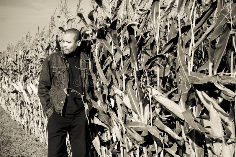 Tijd in cornfield royalty-vrije stock afbeeldingen