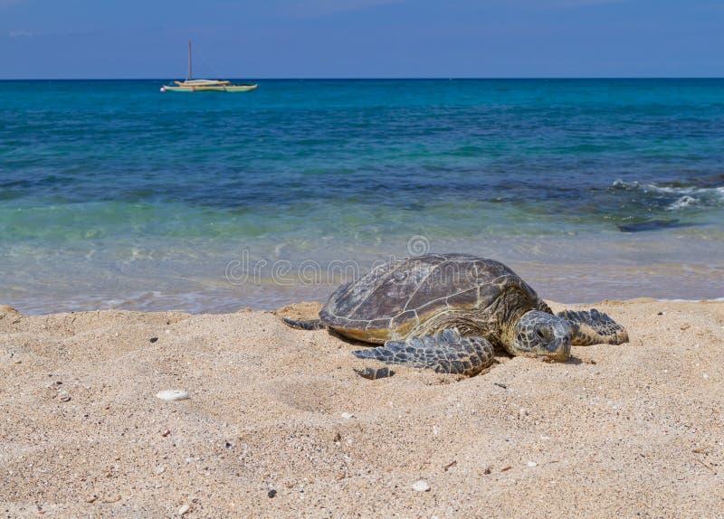 Tijd om op het strand te ontspannen royalty-vrije stock foto's