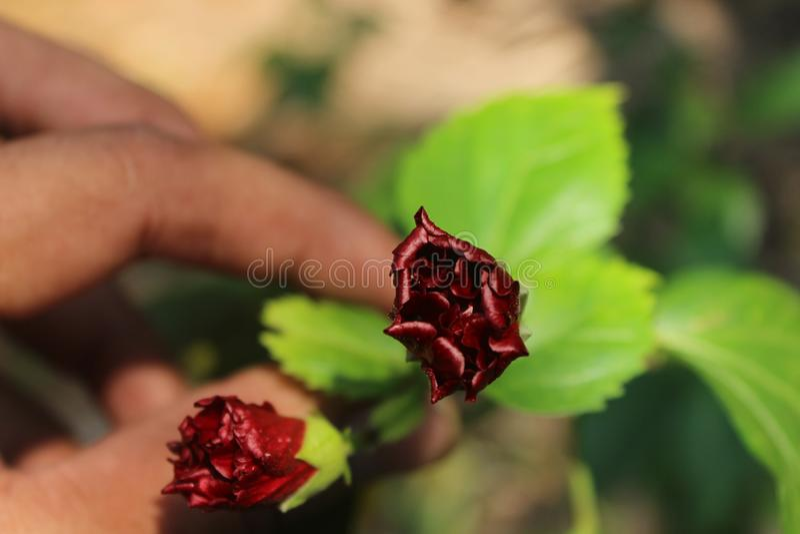 Tijd tot bloei te komen stock foto