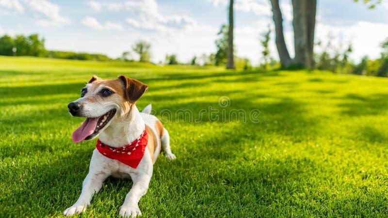 Tijd van de huisdieren de actieve zomer royalty-vrije stock foto