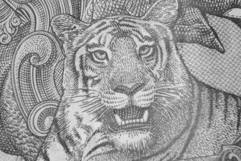 Tijgerillustratie op Indische Bankbiljet Indische Roepie stock illustratie