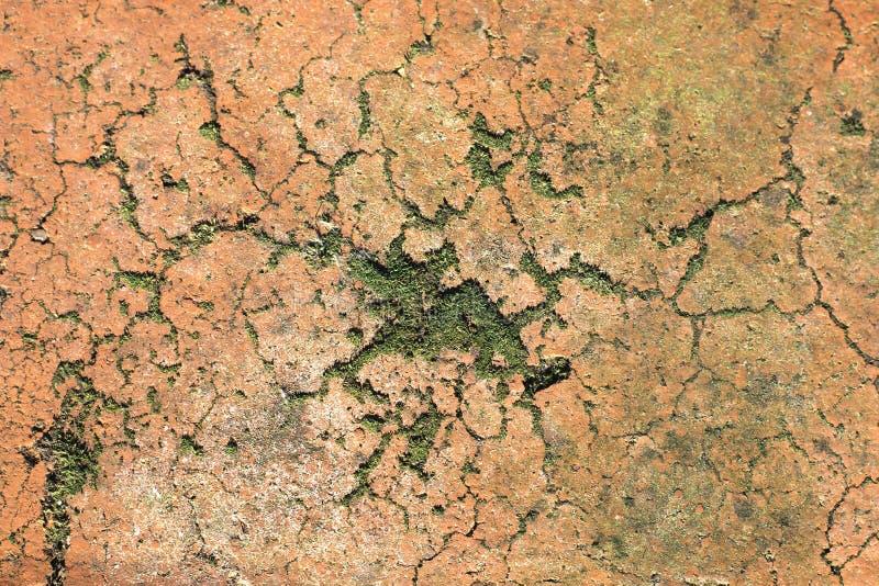Tijolo áspero velho com musgo e molde Escuro rachado - close-up alaranjado do tijolo Fundo natural imagem de stock
