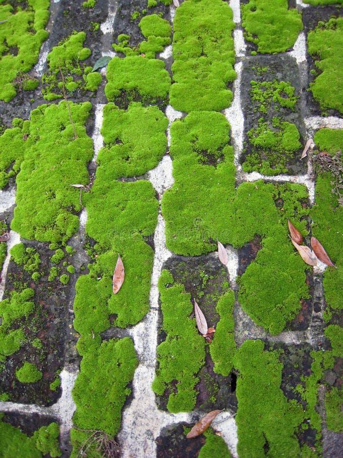 Tijolo Mossy 1 imagem de stock royalty free