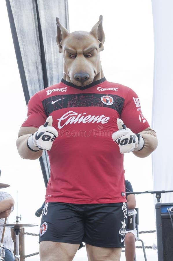Tijuana mascot royalty free stock photography