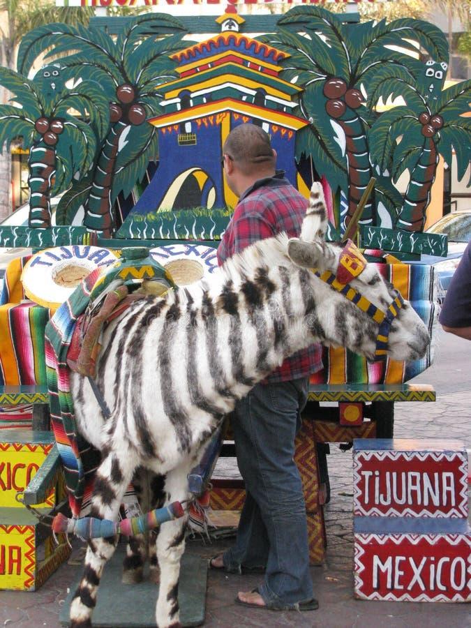Tijuana Zebra image libre de droits