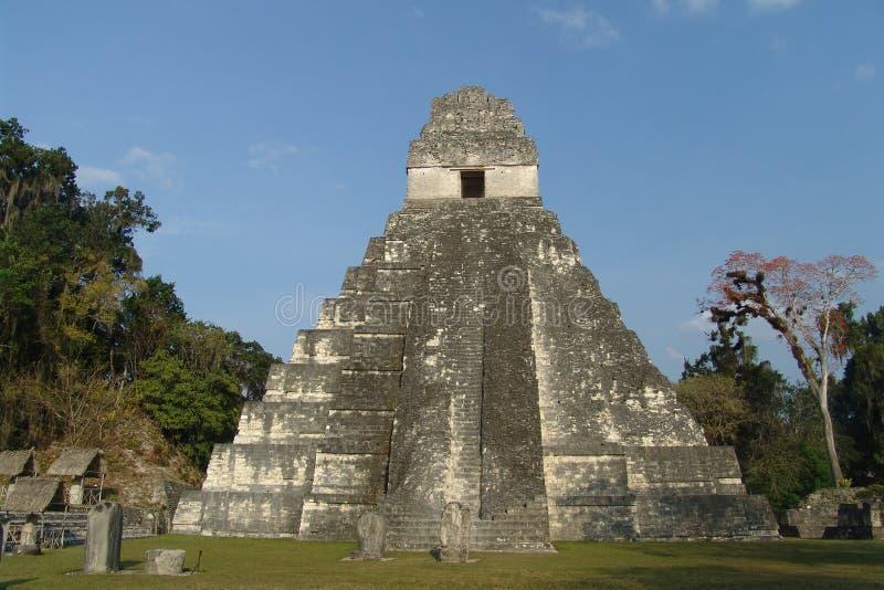 Tikal royalty free stock photos