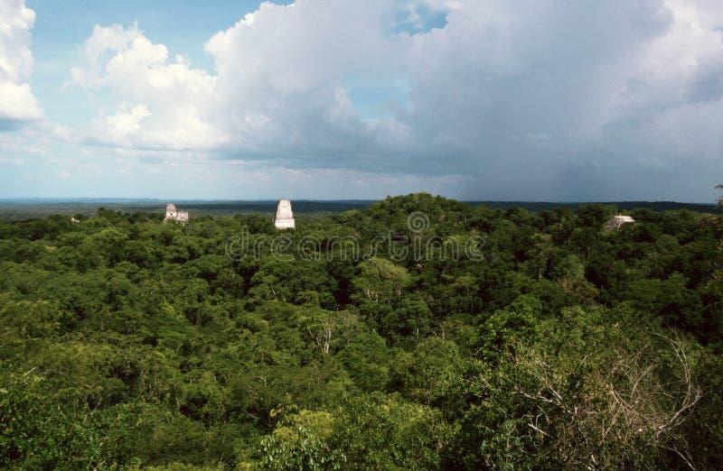 Tikal στοκ εικόνα
