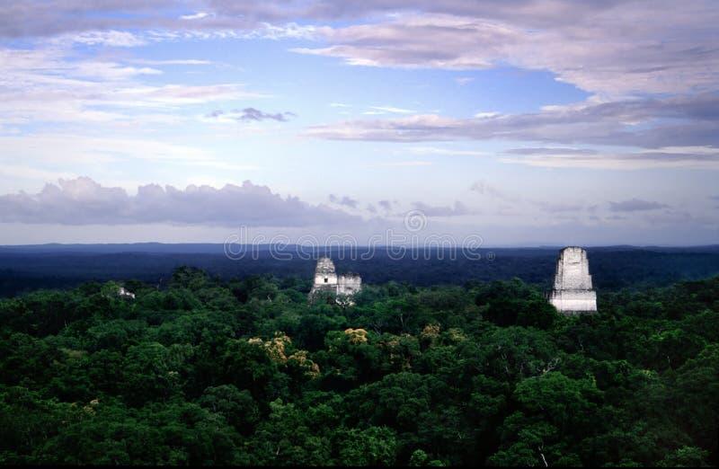 Tikal immagine stock