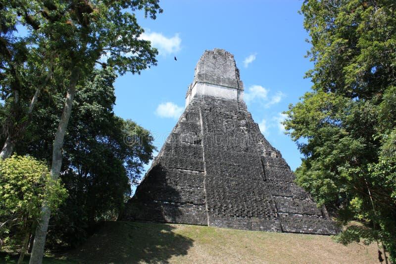 Tikal - the giant jaguar stock photography