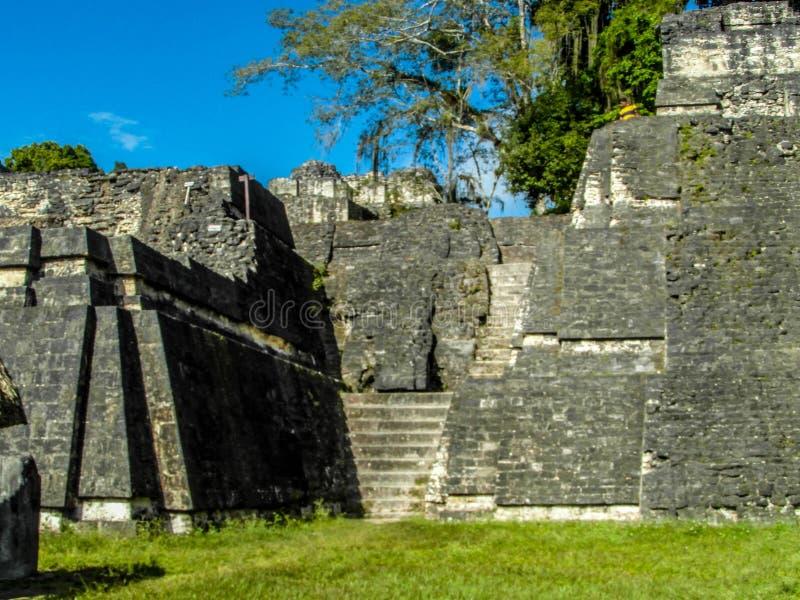 tikal guatemala royaltyfria foton