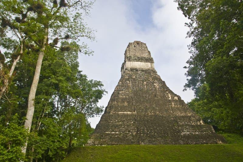 Tikal, Guatemala, Amérique Centrale photographie stock libre de droits